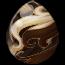 Black Pinto Pegasus Egg