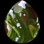 Evergreen Pegasus Egg