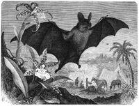 Brehms grosser vampir