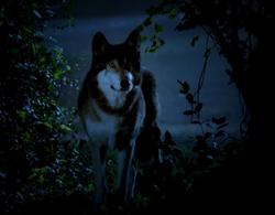 Jackson Werewolf Form