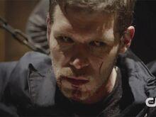 Klaus hybrid face