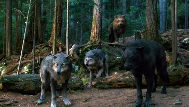 File:2930523-eclipse01 wolf pack.jpg