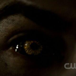 Les yeux de Tyler