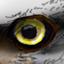 Eye full
