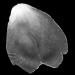 Grey Petal