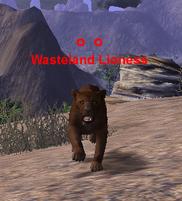 Wasteland Lioness