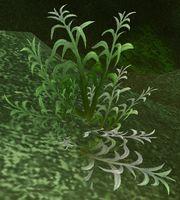 Mountain Silversage | Vanilla WoW Wiki | Fandom