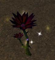 Black Lotus | Vanilla WoW Wiki | FANDOM powered by Wikia