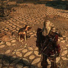 Собака в игре Ведьмак 2