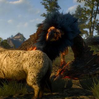 Чучело овцы