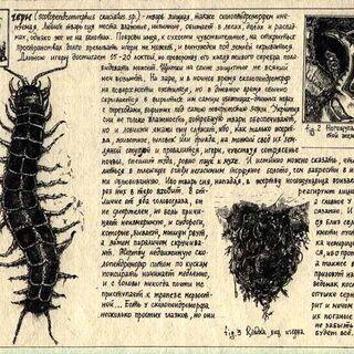 Сколопендроморф в бестиарии Даши Ятвицкой