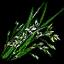 Трава-зубровкаВ3