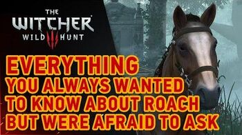 The Witcher 3 Wild Hunt - Roach