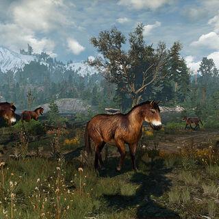 Дикие лошади со <a href=