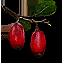 Плод берберкиВ3