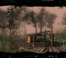Лес на болотах