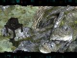 Старая шахта (Ведьмак)