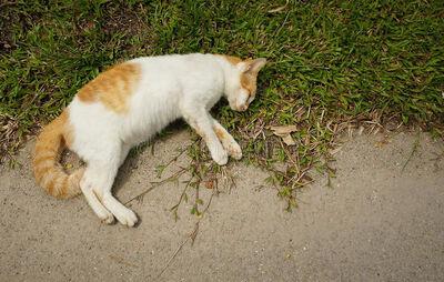 Cat died