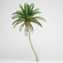 Coconut Palm 3D Model Max Obj Fbx C4d