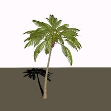 Palm Tree 3D Model Blend