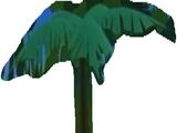 Palm Tree Plants