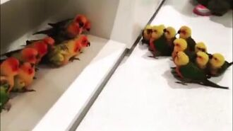 Birb on birb gang violence