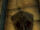 Schild des Heiligen Antonius