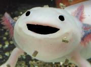 Axolotlsummoningholysand