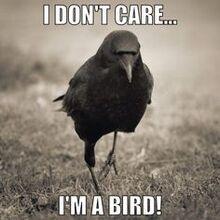 Ima bird
