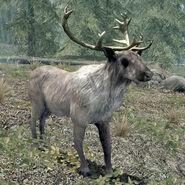 Deer(Skyrim)