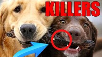 !WARNING!- CUTE DOGS CAN KILL!!