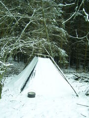 Schneekohte