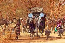 Katikati Nomads