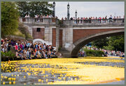 Theduckrace