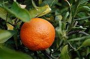 220px-Tangerine