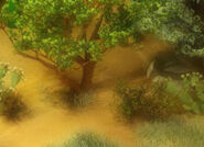AudubonDesertedDesert WSH230