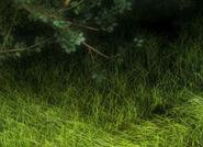 AudubonDarkForest WSH242