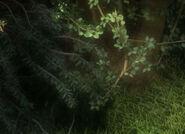 AudubonDarkForest WSH215