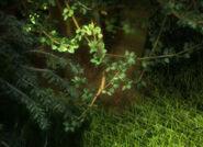 AudubonDarkForest WSH240