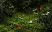 Audubon DarkForest Classic