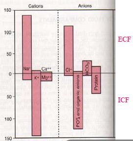 Extracellular enviornmnet