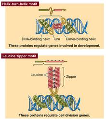 Proteindna1