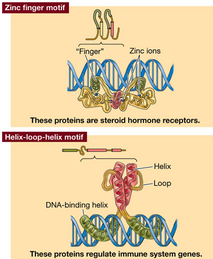 Proteindna2