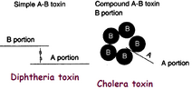 Ab toxin