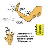Principle muscle3