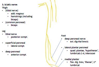File:Nerves.png