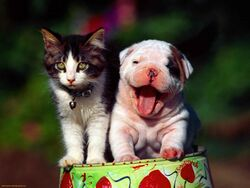 Puppy-and-kitten-playing-1