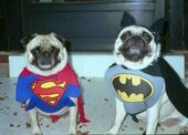 Superherodogs