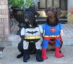 Halloween-superhero-dogs