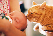 Getty rf photo of cat kissing baby